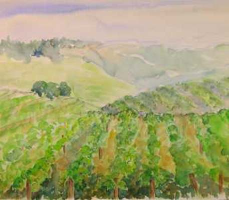 Hilly Vineyards